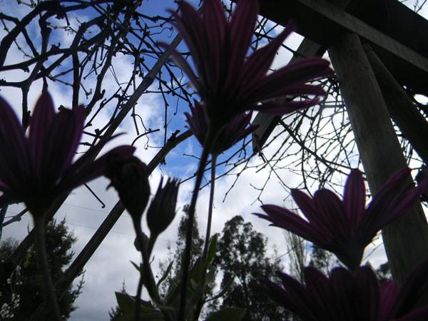 agro_2011sep33.jpg