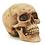 Thumbnail: Grinning Skull