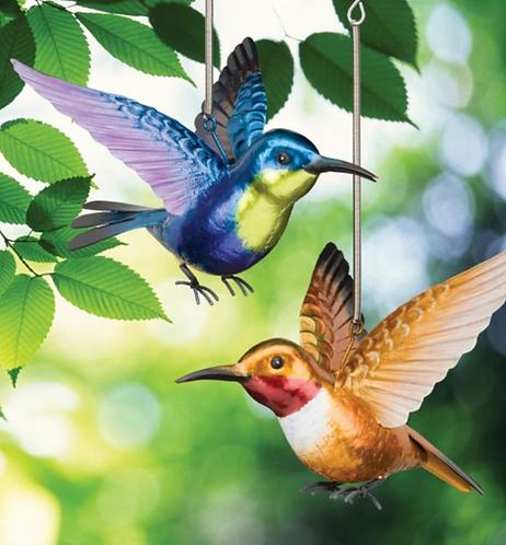 Hummingbird Bouncie