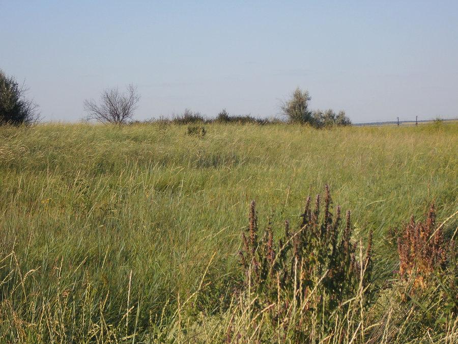 Остатки отвала породы старой шахты в Фёдоровке