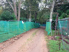Trees being protected by tree protection barriers