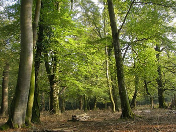 Woodland and tree management
