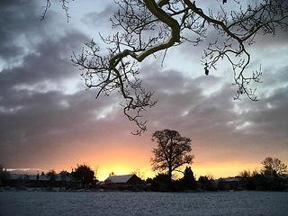 Winter tree scene at sunset