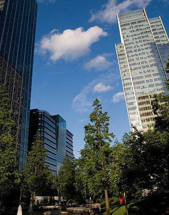 Trees next to buildings