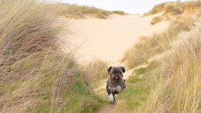 Fancy walking your dog in wild wilderness?