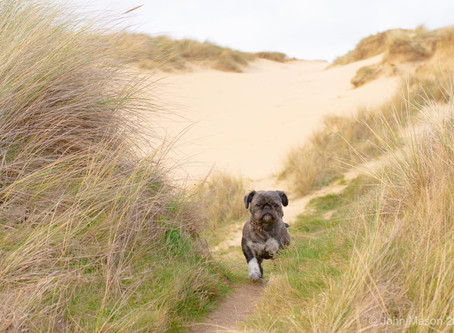 Fancy walking your dog in wild wilderness?