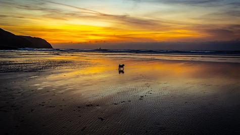 Dogs Solitude
