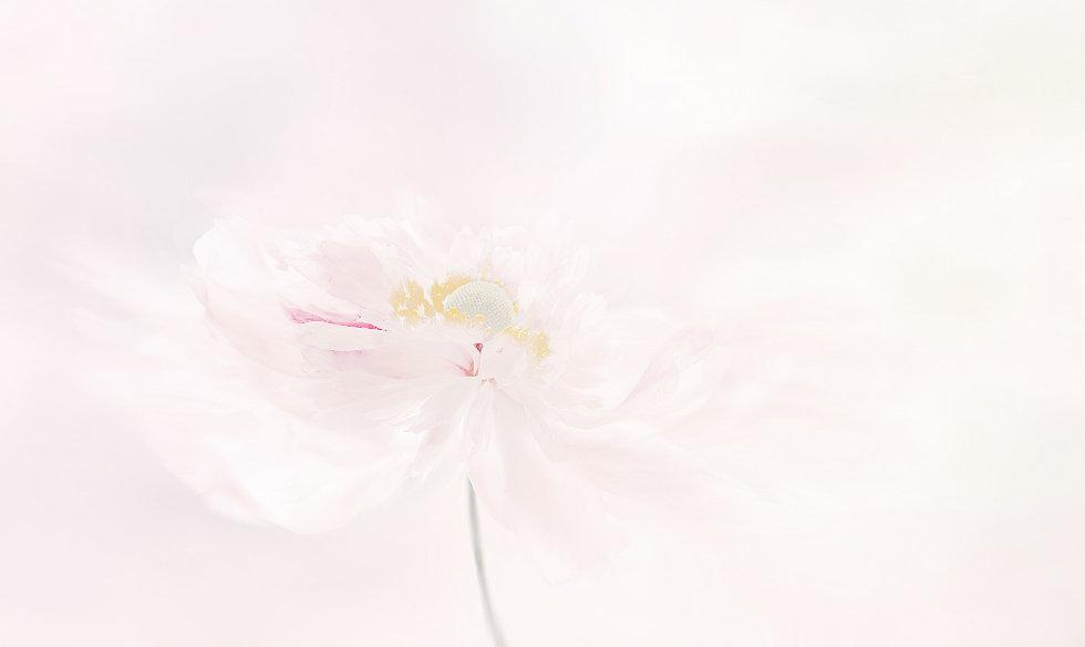 anemone-3527401_1920.jpg