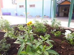 פרויקט בית ספר פורח