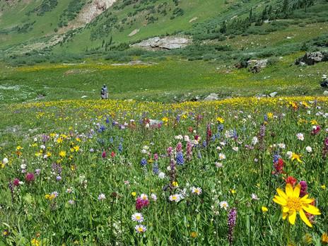 Wild Flower Hiking in Colorado