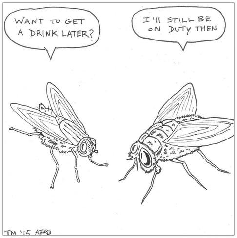 Flies on Duty