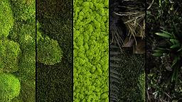 Toiture végétalisée | Architecte paysagiste