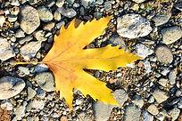autumn-3004517_1920.jpg