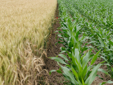 To Make Agriculture More Climate-friendly, Carbon Farming Needs Clear Rules