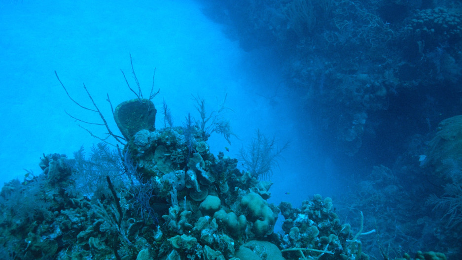 What Is 'Marine Snow' and How Does It Help the Ocean to Store Carbon?
