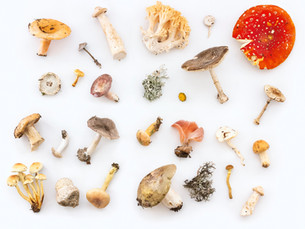 How Mushrooms Are Capping the Alternative Proteins Market