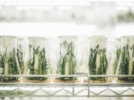 Supercharging Photosynthesis – Nature's Form of Carbon Sequestration