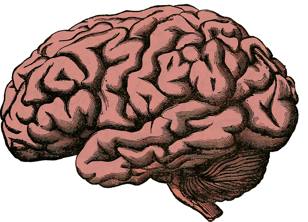 An illustration of the brain