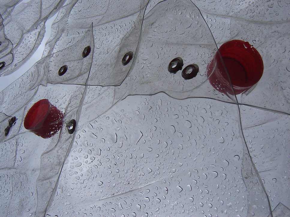 arbol coca 2009.JPG
