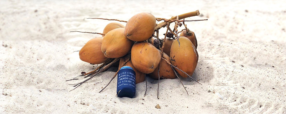Ninefoot Koozie stubbie holder photographed by a bunch of coconuts on the beach