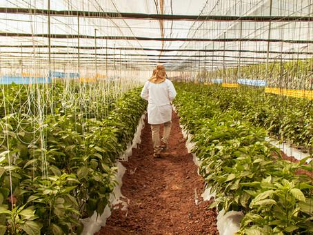 El Crecimiento de la Agricultura Protegida en México