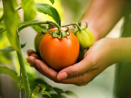 Se consolida el Acuerdo de Suspensión sobre el Tomate Mexicano