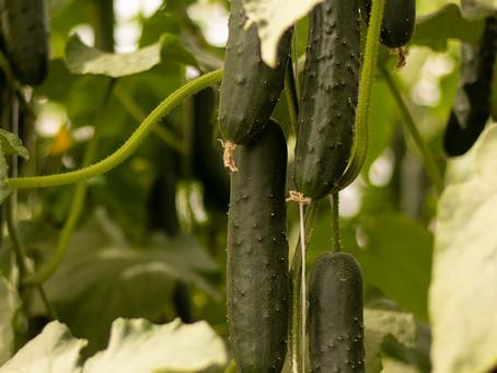 Un Invernadero Mejora el Rendimiento de tu Cultivo