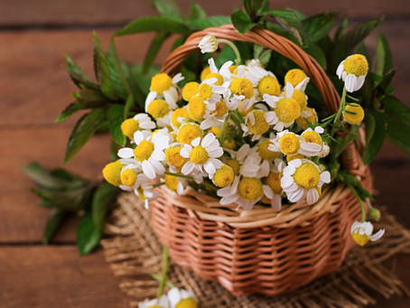 Brighten your skin with Chamomile