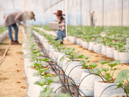 $41 mil Pesos por Cuidar un Invernadero en Canadá