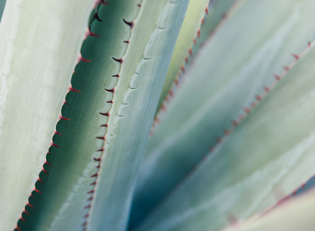 What is the use of Agave Syrup?
