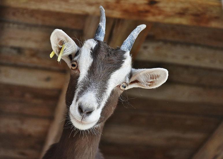 Goat's Milk Bar Soap