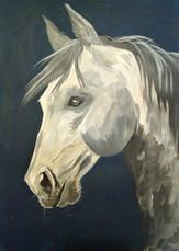 cheval gris (3).jpg