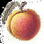 peach_2_100.png