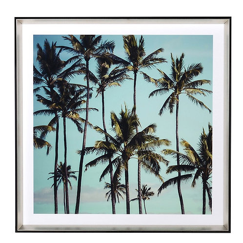 Blue Sky Palm Trees Picture