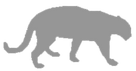 03-Silver Sponsor-Mountain Lion.png