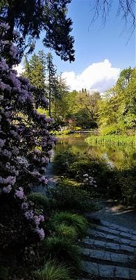 Crystal Springs Rhododendron Garden-