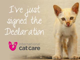 Cats matter too!