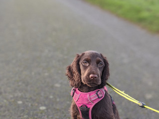 SOCIALISATION: Are you getting it right?