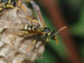 Wasp-Paper-1024x767.jpg