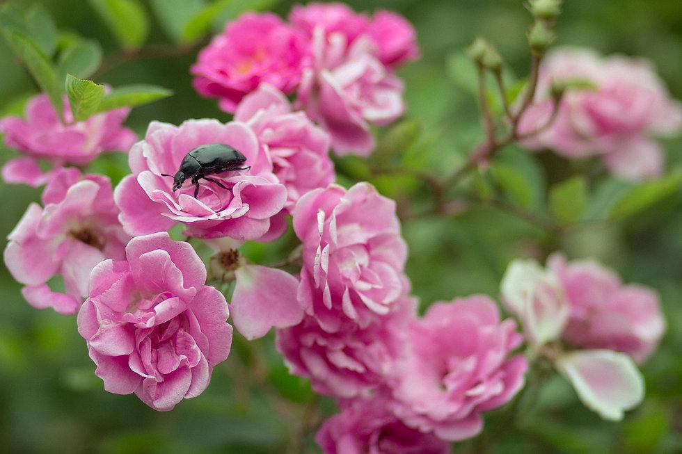 flowers-1744434_1280.jpg