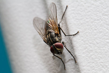 fly_on_the_wall_by_kenjis9965-d2z3ogs.jp