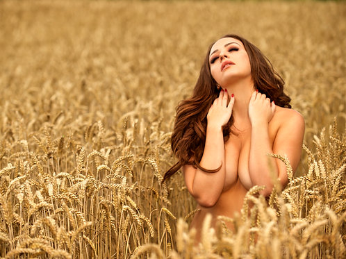 Barley Field Tabby