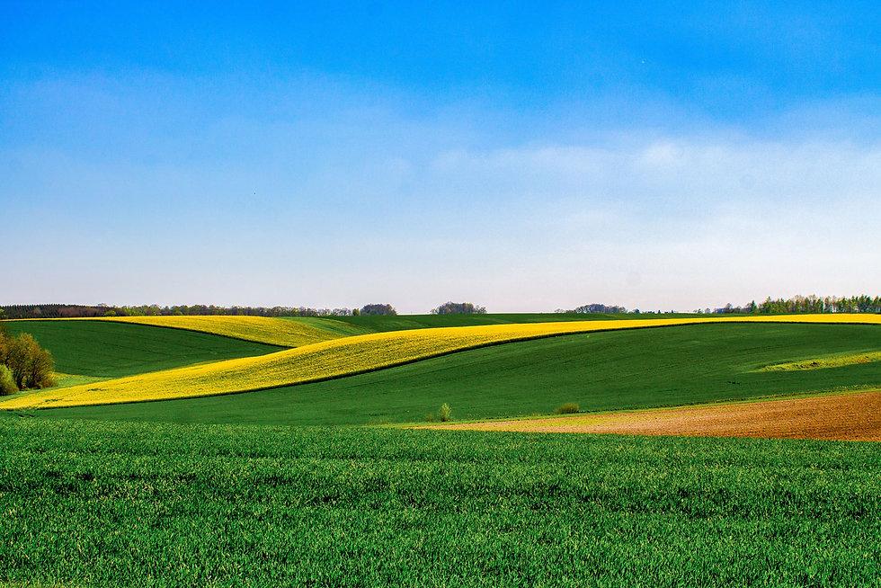 green-field-2237485.jpg
