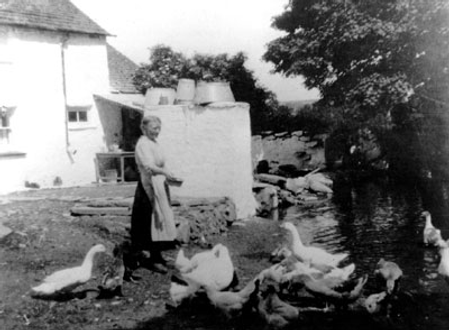 feeding the geese history.png