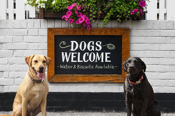 dog friendly eating out.jpg