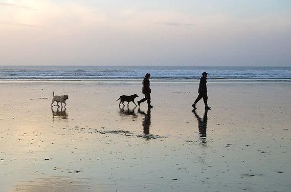 Walking_the_dogs_on_beach.jpg