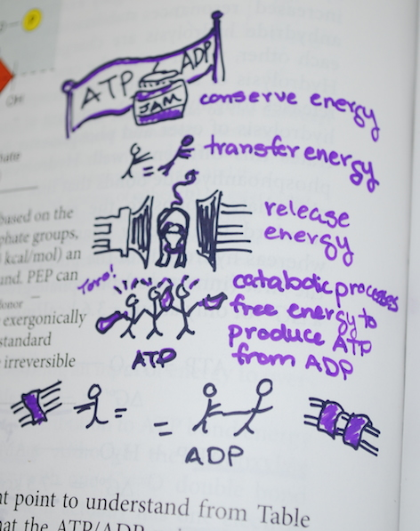 ATP/ADP