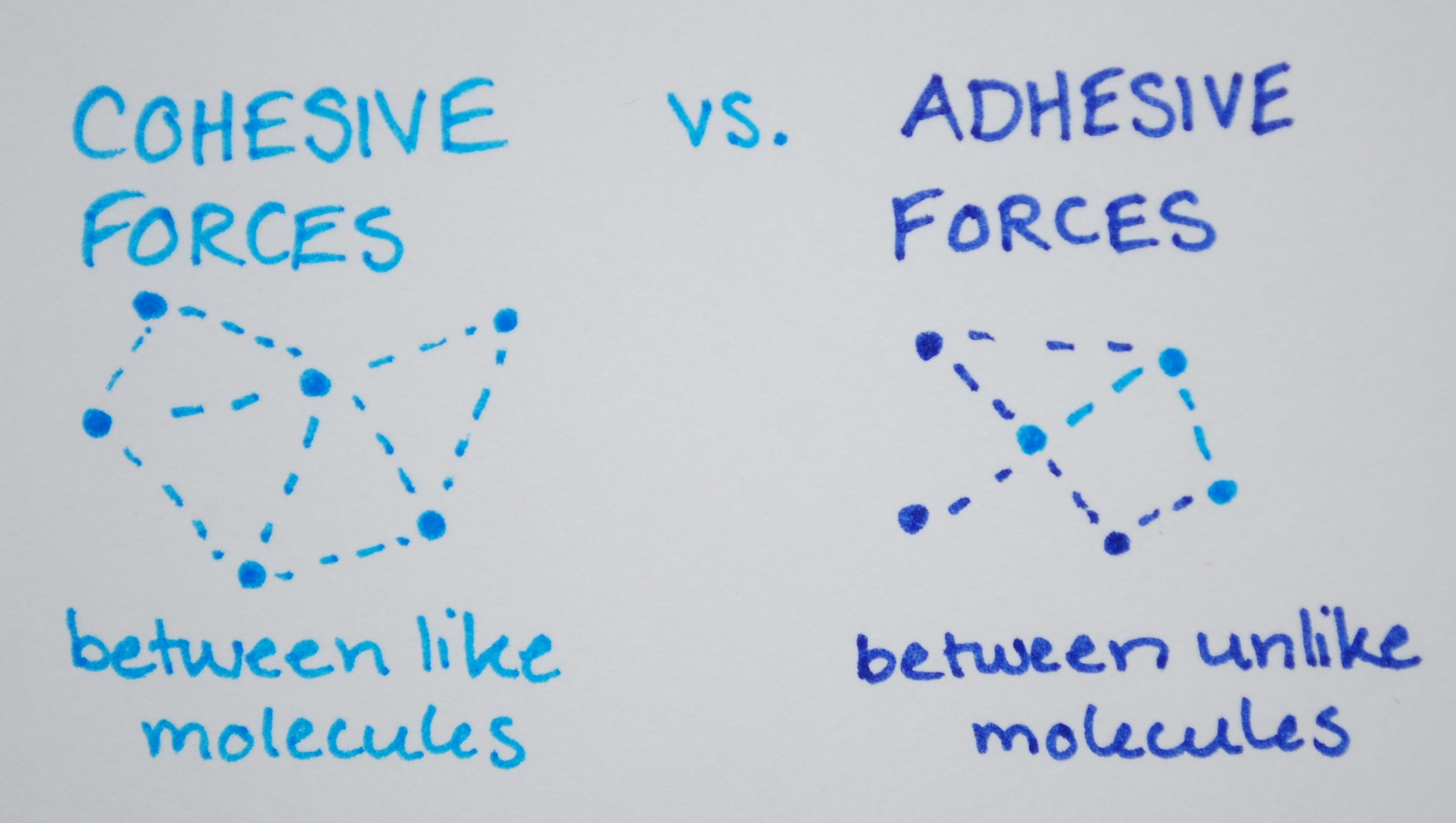 Cohesive Adhesive Forces