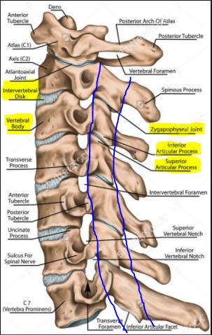 Cervical Spine Littleton CO