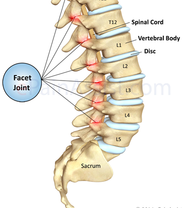 spinal facet joints